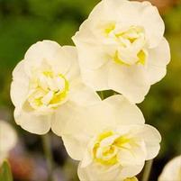 3-flowers.jpg